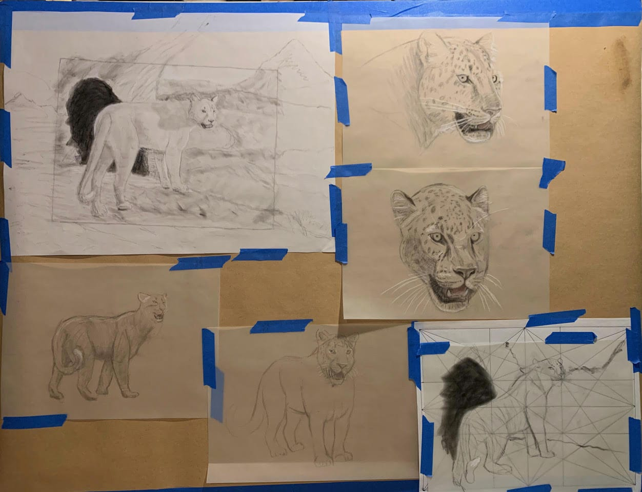 Concept drawings for the leopard.